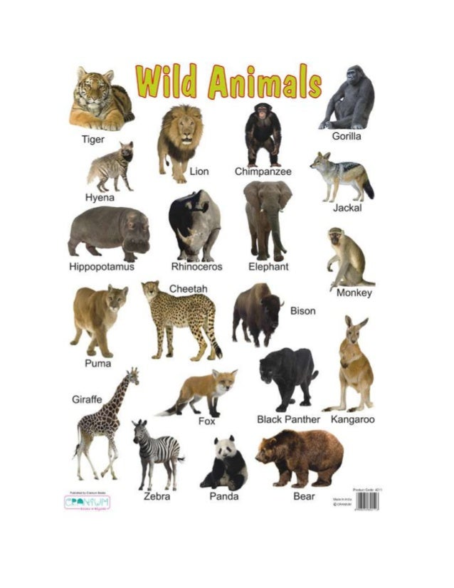 paragraph on plant and animal
