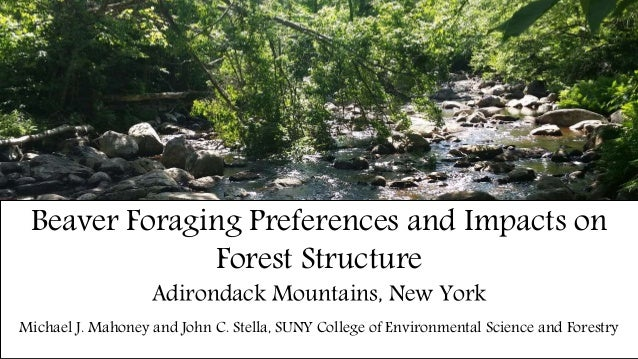 Beaver Foraging Preferences and Impacts on Forest Structure Adirondack Mountains, New York Michael J. Mahoney and John C. ...