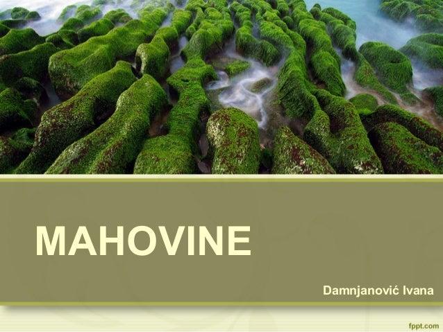 MAHOVINE Damnjanović Ivana