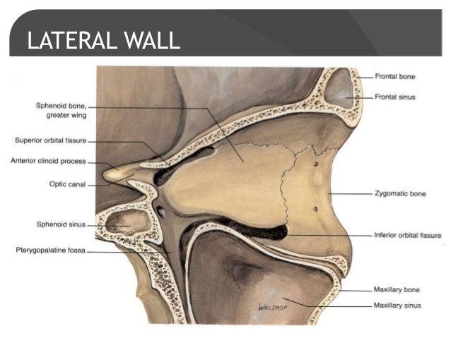 sphenoid bone hemangioma – citybeauty, Human Body