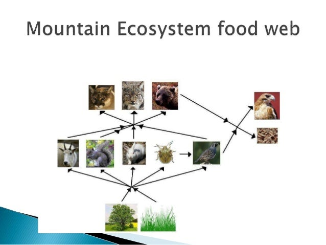 Mountain ecosystem pictures