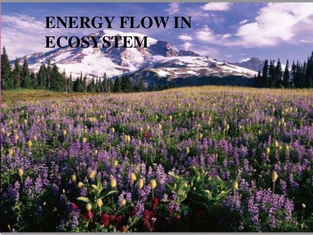 ENERGY FLOW INECOSYSTEM
