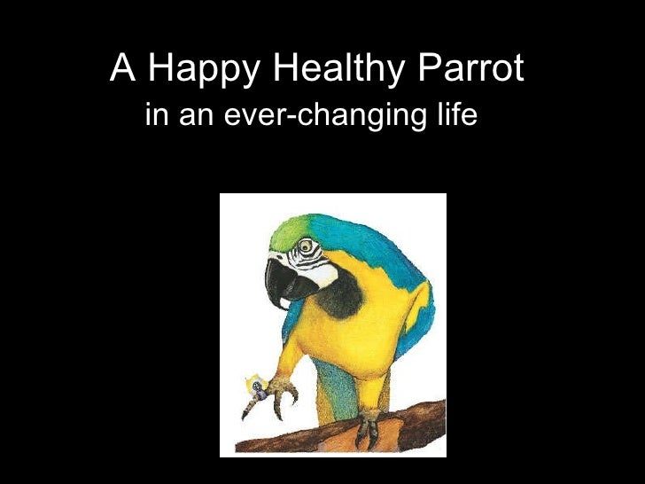 A Happy Healthy Parrot in an ever-changing life