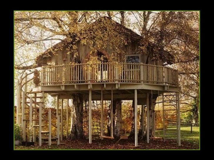 Maisons dans-les-arbres Slide 2