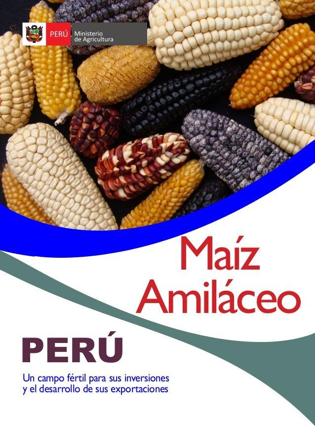Un campo fértil para sus inversiones y el desarrollo de sus exportaciones Maíz Amiláceo