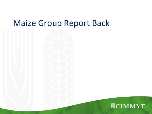Maize Group Report Back