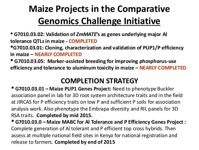 Maize Projects in the Comparative Genomics Challenge Initiative • G7010.03.02: Validation of ZmMATE's as genes underlying ...