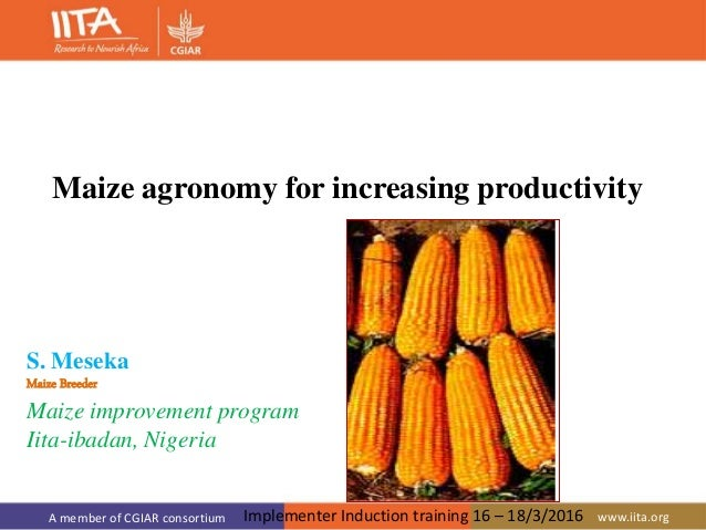 A member of CGIAR consortium www.iita.org S. Meseka Maize Breeder Maize improvement program Iita-ibadan, Nigeria Maize agr...