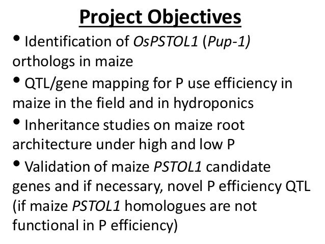 GRM 2013: Cloning, characterization and validation of PUP1/P efficiency in maize -- L Kochian Slide 2