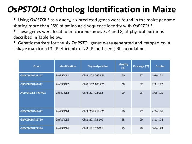 GRM 2013: Cloning, characterization and validation of PUP1/P efficiency in maize -- L Kochian Slide 3