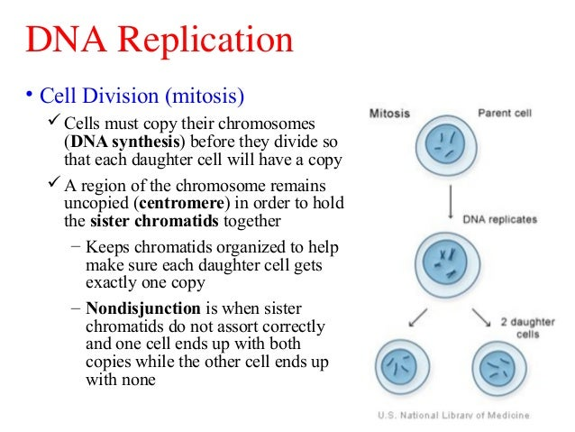 Dna replication worksheet answers why does dna need to replicate