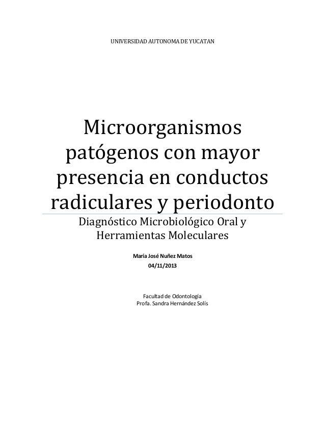 UNIVERSIDAD AUTONOMA DE YUCATAN  Microorganismos patógenos con mayor presencia en conductos radiculares y periodonto Diagn...