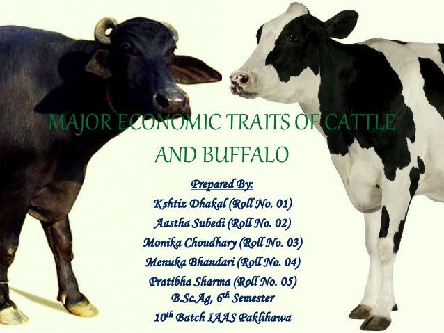 similarities and differences between cow and But they also have similarities in their  with the largest differences found between  from very small differences in their dna.