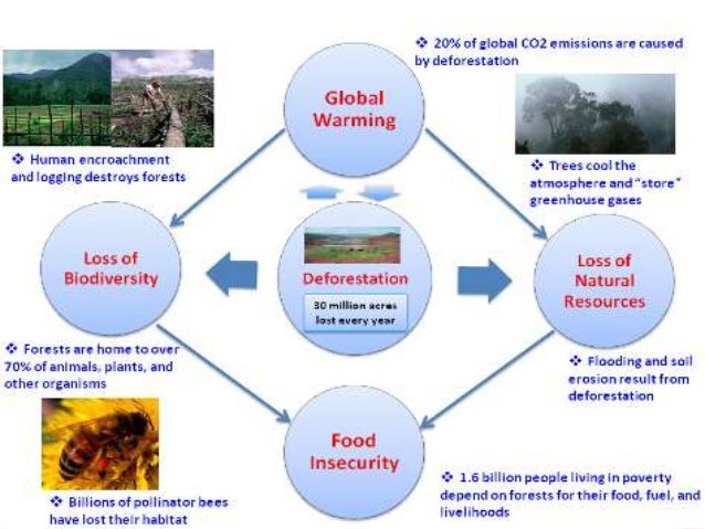 Major Environmental Issues In India