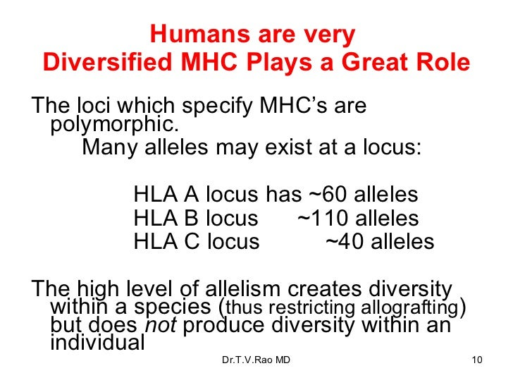 Humans are very  Diversified MHC Plays a Great Role <ul><li>The loci which specify MHC's are polymorphic. </li></ul><ul><l...
