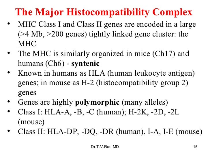 The Major Histocompatibility Complex <ul><li>MHC Class I and Class II genes are encoded in a large (>4 Mb, >200 genes) tig...