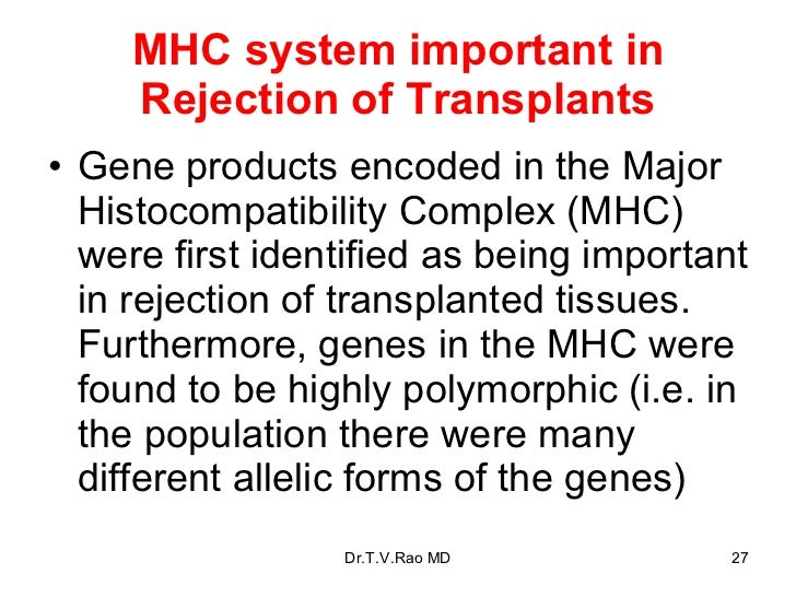 MHC system important in Rejection of Transplants <ul><li>Gene products encoded in the Major Histocompatibility Complex (MH...