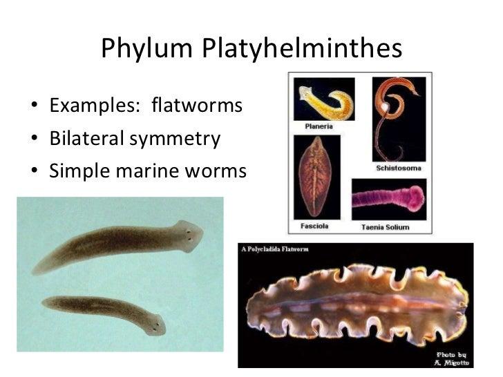 Major Marine Invertebrate Phyla Powerpoint