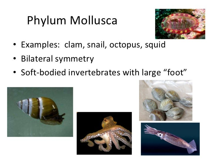 Major marine invertebrate phyla powerpoint