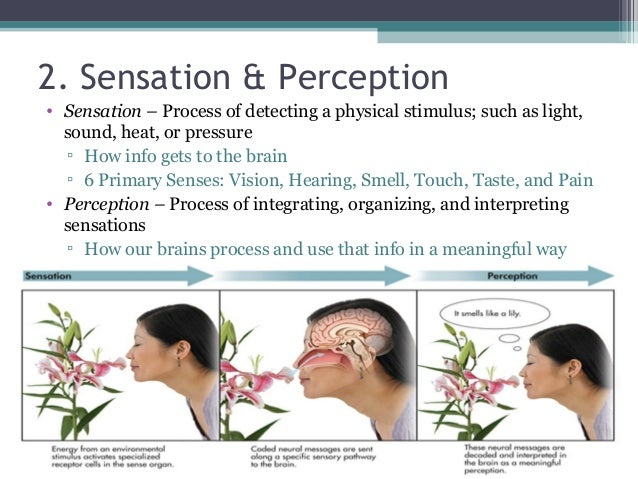 adaptation and sensory perception essay The topics of sensation and perception are among the oldest and most  when a  stimulus is constant and unchanging, we experience sensory adaptation  3 for  30 seconds and then immediately look at a sheet of white paper or a wall.