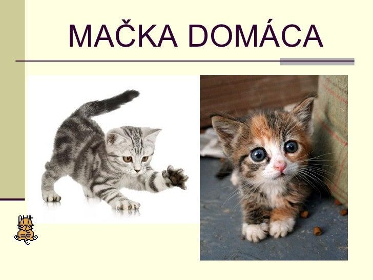 Drobné mačička Foto