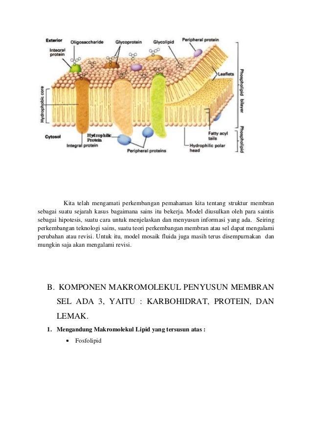 Fosfolipid – Pengertian, Struktur, Fungsi dan Macam-macam