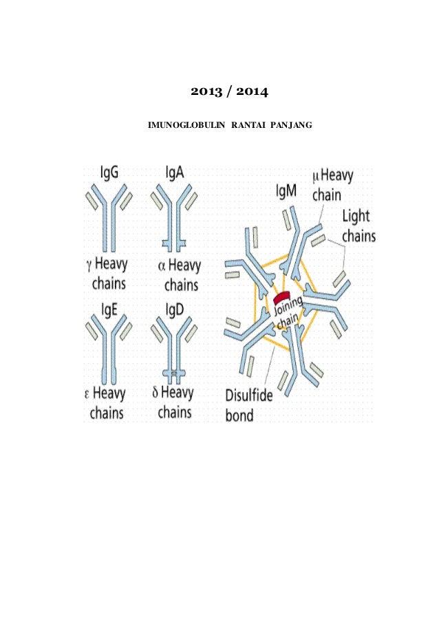 Makalah imunoglobin fitri andriani