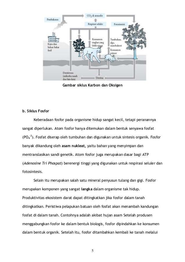 makalah siklus biogeokimia