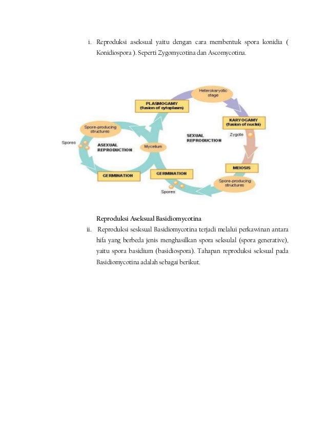 Struktur tubuh buah basidiomycota asexual reproduction