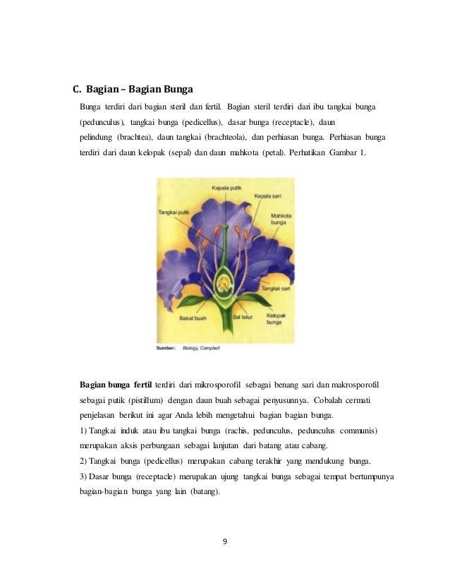 Sebutkan Gambar Bagian Bunga Dan Cara Penyerbukannya Berbagai Bagian Penting