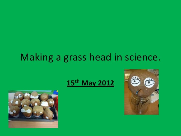 Making a grass head in science.          15th May 2012