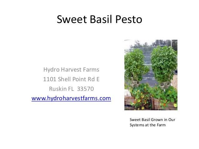 Sweet Basil Pesto Hydro Harvest Farms 1101 Shell Point Rd E Ruskin FL 33570 www.hydroharvestfarms.com Sweet Basil Grown in...