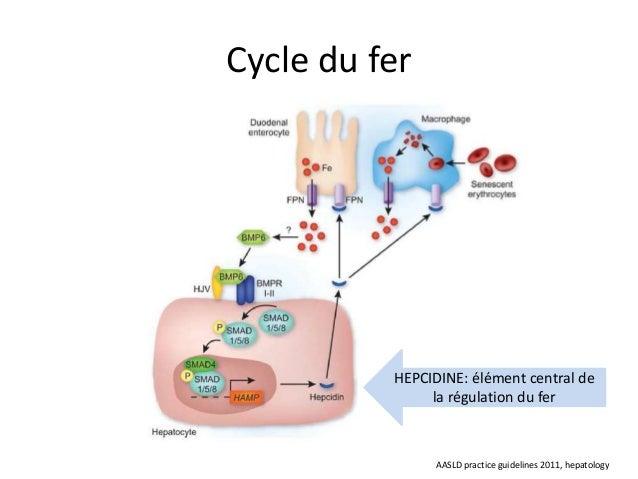 Cycle du fer          HEPCIDINE: élément central de               la régulation du fer                AASLD practice guide...