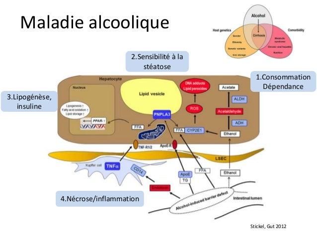 Maladie alcoolique                                   2.Sensibilité à la                                       stéatose    ...
