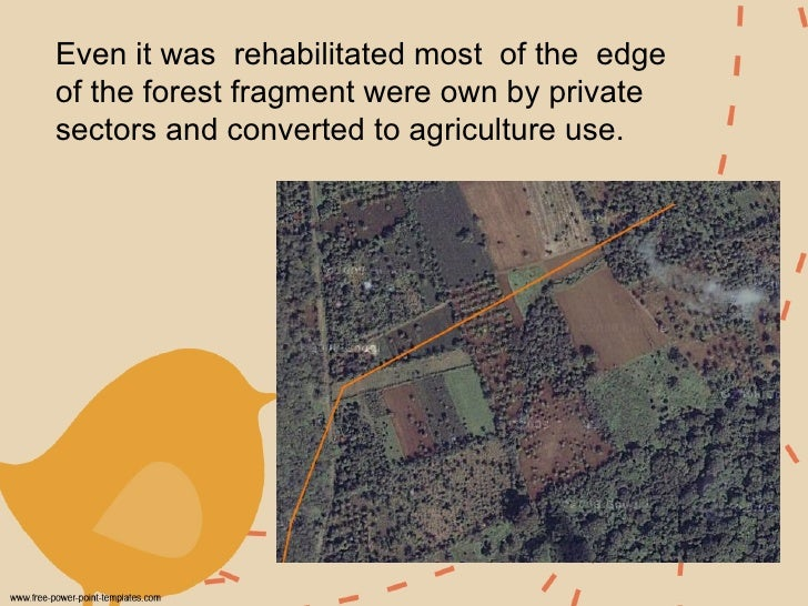 Even it was  rehabilitated most  of the  edge of the forest fragment were own by private sectors and converted to agricult...