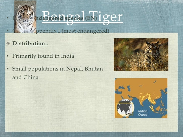 The physical description and settlement of bengal tigers an endangered species
