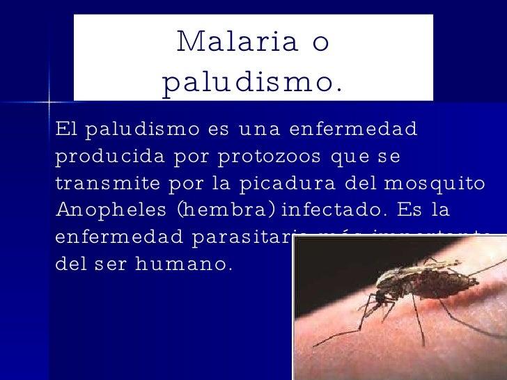 Malaria o paludismo. El paludismo es una enfermedad producida por protozoos que se transmite por la picadura del mosquito ...
