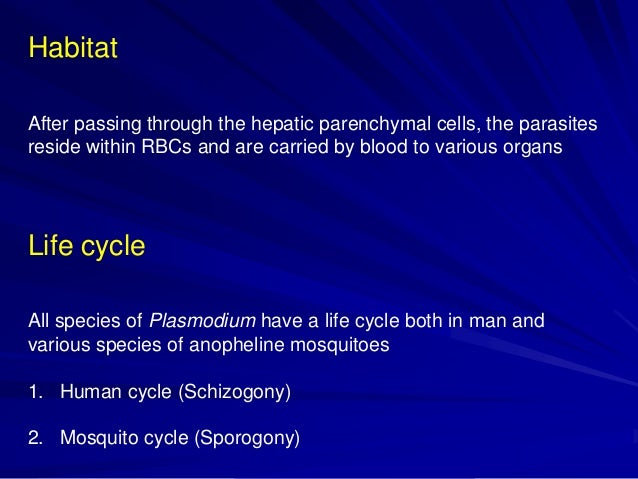 life cycle of plasmodium vivax in man and mosquito pdf