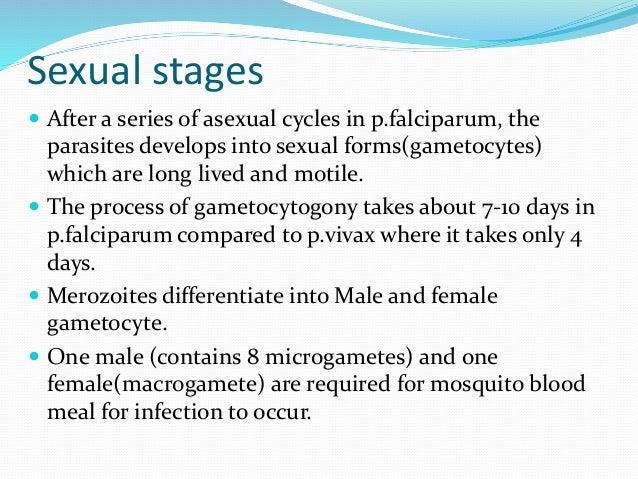Sporogony asexual definition