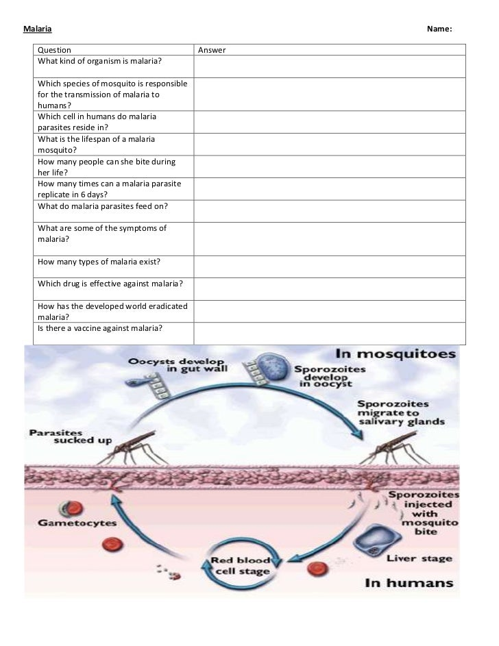 MalariaName:<br />QuestionAnswerWhat kind of organism is malaria?Which species of mosquito is responsible for the transmis...