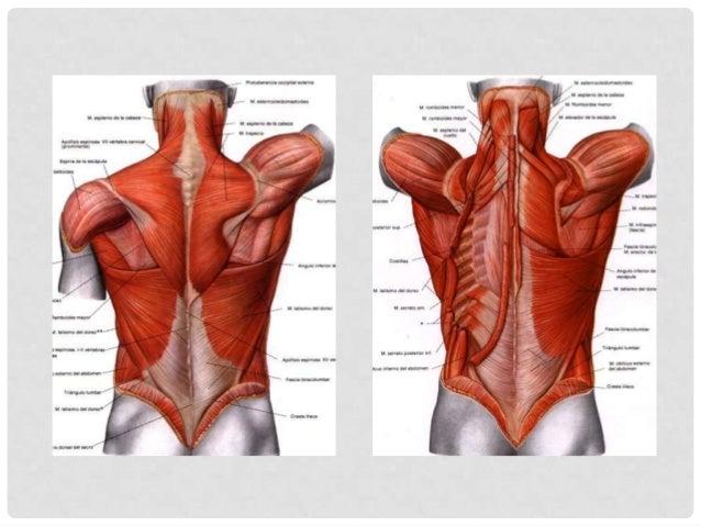 Es una presentación de la    tuberculosis extra- pulmonar que afecta la       Es causada por          columna,específicame...