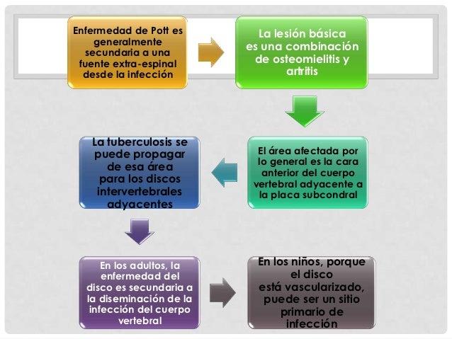 Colonización                          La histología ósea   vertebral                             esponjosa del           ...