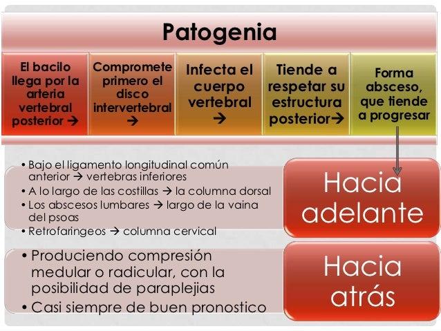 Mycobacterium                 Vía hematógena                 (arteria vertebral                     posterior)            ...