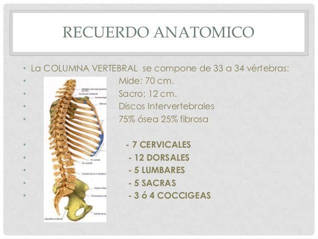 RECUERDO ANATOMICO• La COLUMNA VERTEBRAL se compone de 33 a 34 vértebras:•                 Mide: 70 cm.•                 S...