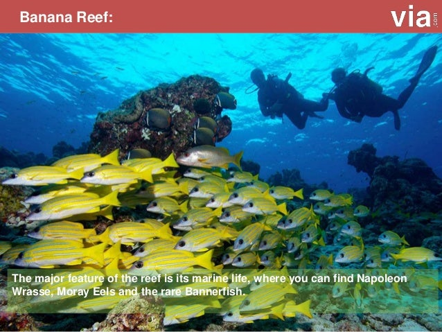 HP Reef: If you are looking for a close encounter with numerous marine life beneath the deep blue sea, this place is for y...