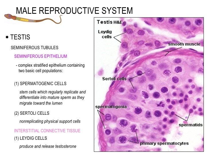male, Human body