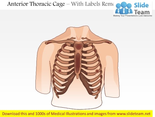 Male chest wall anterior view medical images for power point anterior thoracic cage with labels removed ccuart Choice Image