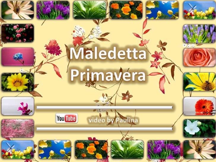 Maledetta Primavera<br />video by Paulina<br />