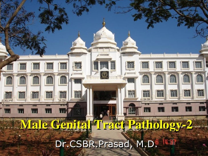 Male Genital Tract Pathology-2      Dr.CSBR.Prasad, M.D.
