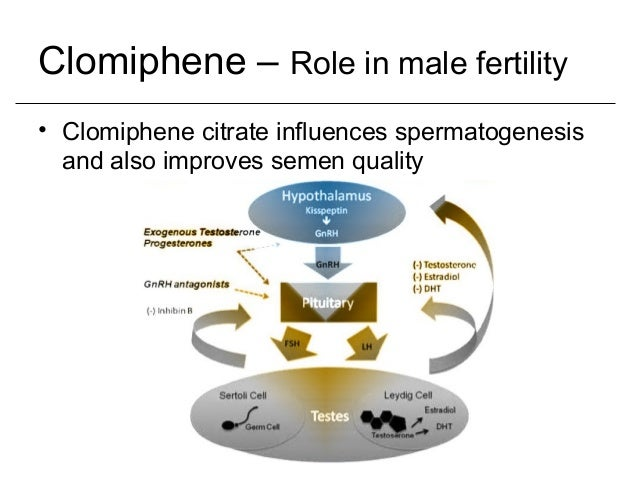 clomiphene citrate used in males